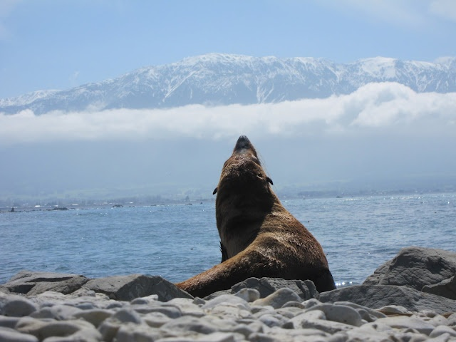 New Zealand: Favorite Places, Mis Viajes, New Zealand, Amazing Sight