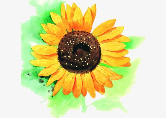 رسمت باليد عباد الشمس Flower Painting Hand Painted Flowers Sunflower Clipart