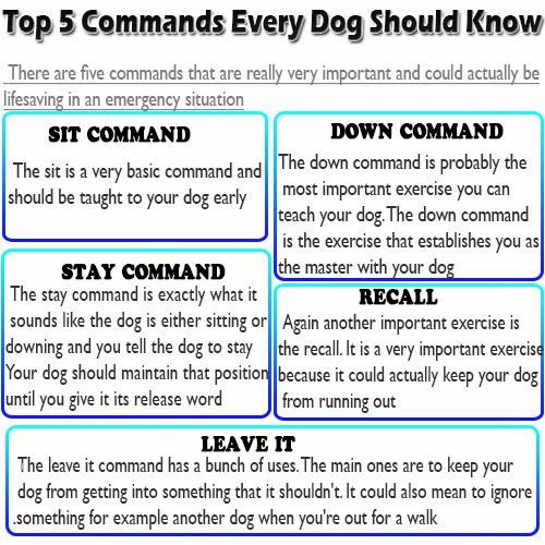 5 Commands every dog should know.  http://www.petclubindia.com/