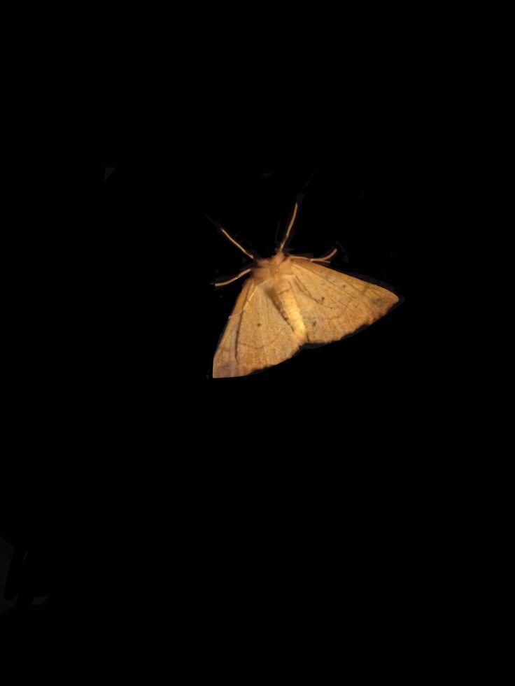 Moth's are pretty