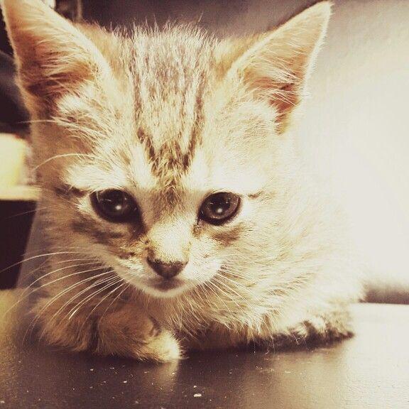 El gato del peluquero