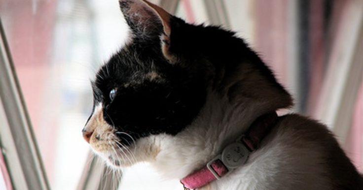 Collares antipulgas naturales. Los collares antipulgas naturales son una forma efectiva y por lo general de bajo costo para proteger a tu gato. Utilizarlos es una buena alternativa a los productos más comerciales, que contienen productos químicos que dañan a tu gato, así como al medio ambiente. Desafortunadamente, si tu mascota está muy infestada de pulgas, tal vez tengas que ...