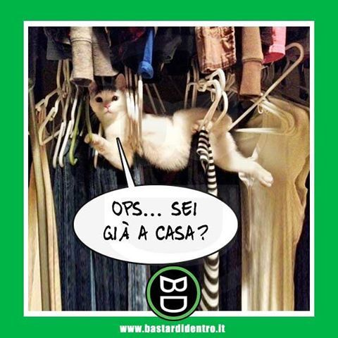 #gatti #bastardidentro www.bastardidentro.it