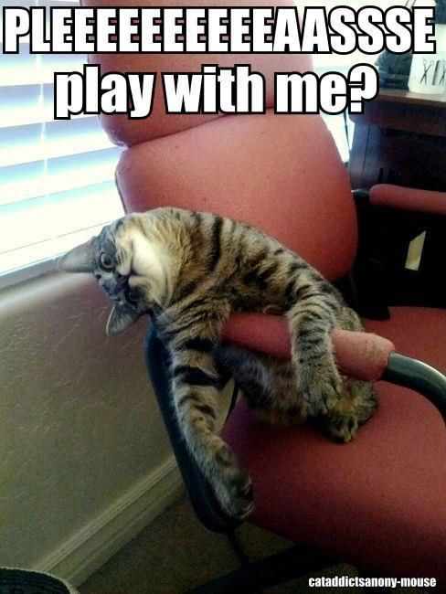 Hate Mondays, Mondays Again, Funny Pictures, Funny Cat, Happy Monday, Funny Stuff, Kitty, Feelings, Animal