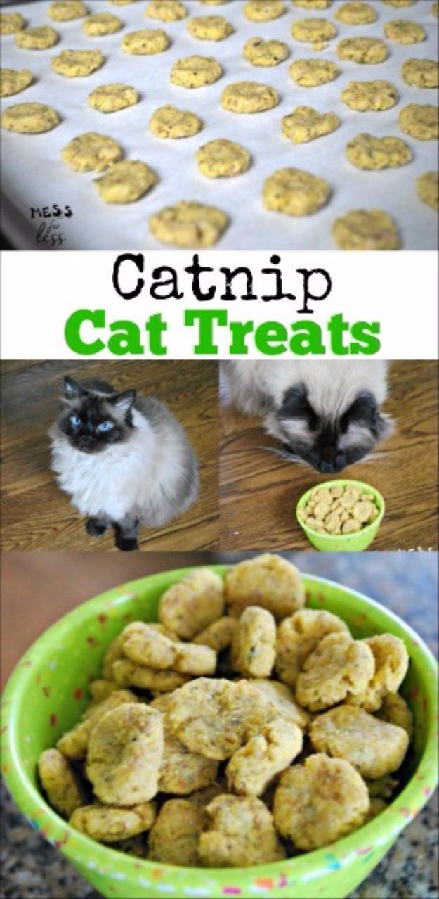DIY Pet Recipes For Treats and Food - Catnip Cat Treats Recipe - Dogs, Cats and Puppies Will Love These Homemade Products and Healthy Recipe Ideas - Peanut Butter, Gluten Free, Grain Free - How To Make Home made Dog and Cat Food - http://diyjoy.com/diy-pet-recipes-food