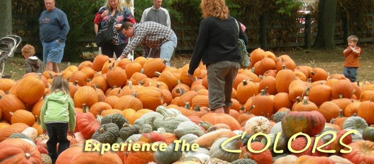 Pumpkin Patch at Freemans Farm Fall Festival