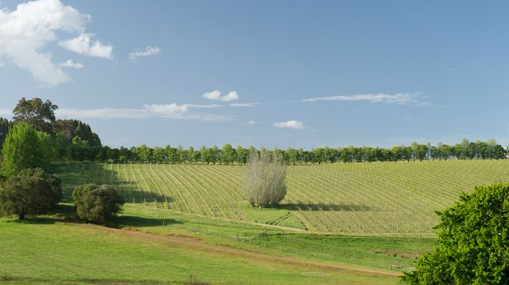 Salitage vineyard in Pemberton wine region
