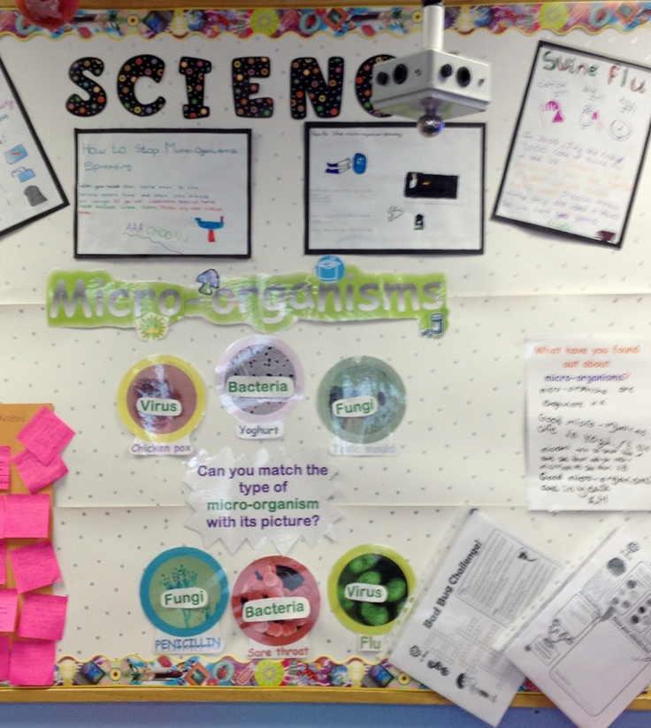 Micro-organisms display.  My Year 6 pupils enjoyed looking at microscopic pictures of different microbes and matching them with the type they thought they were.