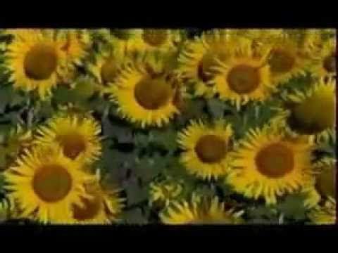 Ho'oponopono (Meditación Español) por Vivi Cervera