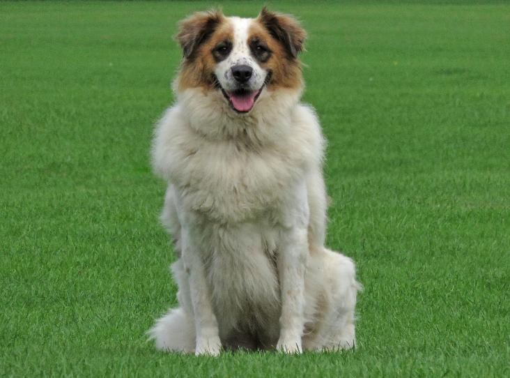 Martha Find A Pet Rspca Org Uk Pets Animals Crossbreed