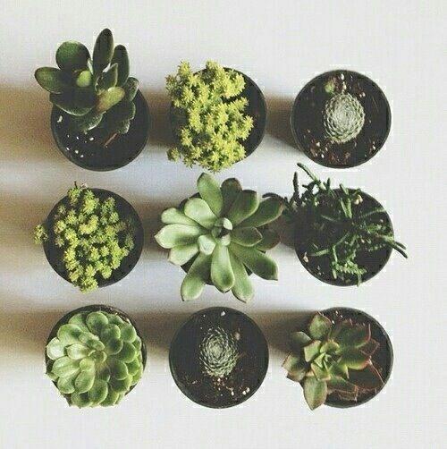 Imagen de plants, green, and cactus