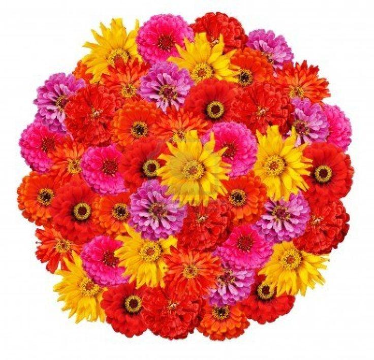 zinnia flower pictures   zinnia flower bouquet zinnia flower bouquet zinnia flower bouquet ...