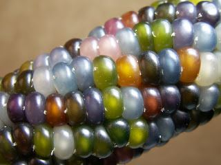 As Many Exceptions As Rules: Corn Color Concepts