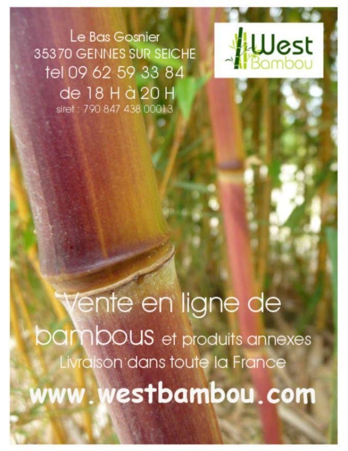 1000 id es sur le th me bambou non tra ant sur pinterest fargesia haies et bambou fargesia. Black Bedroom Furniture Sets. Home Design Ideas