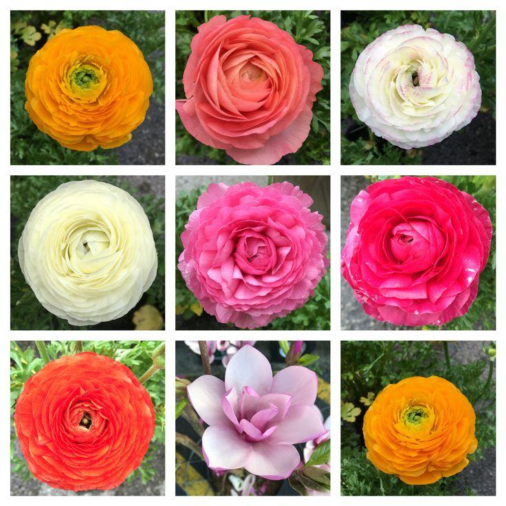My fav season flower :)