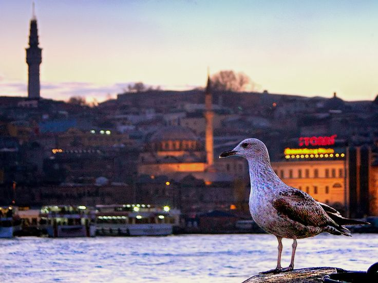 """""""I dont like storks at all, none of the seagulls here do. I am the king of this city, for all seasons. The seagulls rule!..."""" by M.A. Oral"""