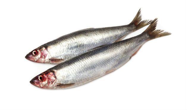 As melhores espécies de peixes para a sua saúde