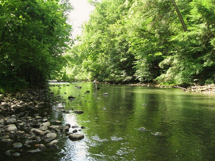 16 best mohican state park images on pinterest national for Fly fishing ohio