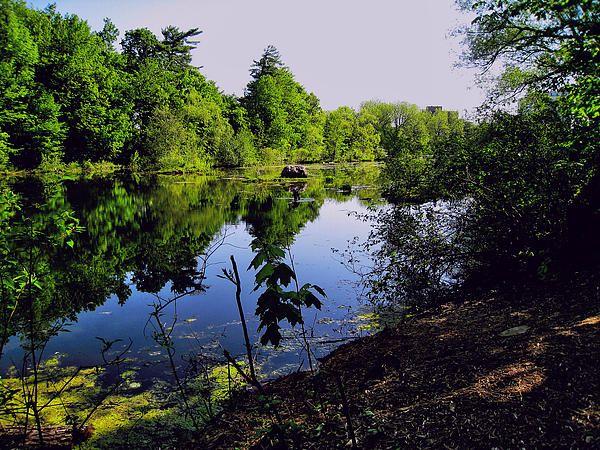 Milton, Ontario - Milton Pond