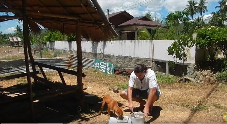 Feeding Homeless Dogs Thailand - Trent James https://www.youtube.com/watch?v=n2VukgC0DEY #dogs #dog #puppy #homelessdogs #homelessdog #rescuedog