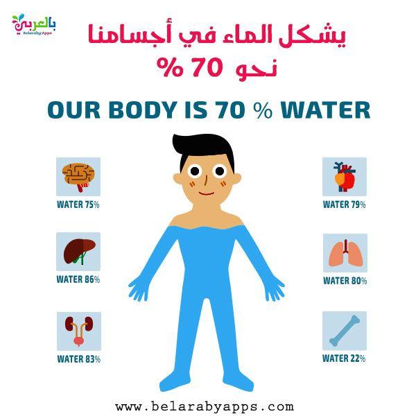 موضوع عن الماء موضوع تعبير عن الماء سر الحياة بالعربي نتعلم Family Guy Our Body Body In 2021 Our Body Body Character