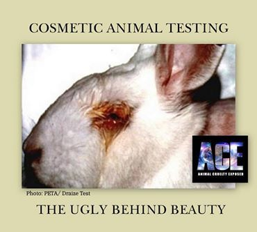 animal testing its wrong Animal welfare what is the future of animal testing recent tests of car exhaust on monkeys have renewed the debate around animal testing while researchers say eliminating animal testing is impossible, they agree there.