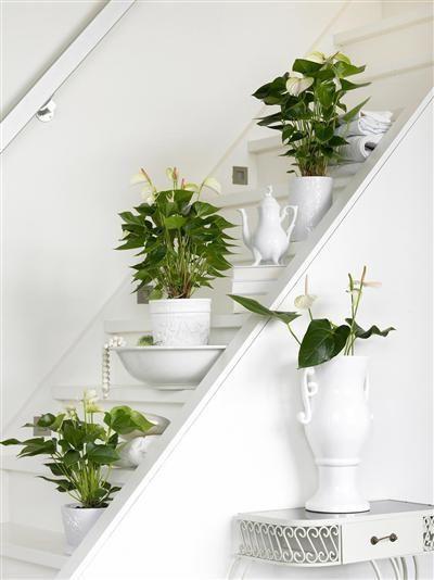House plants kamerplanten gezellig op een rijtje met witte potten anthurium flowers - Witte steen leroy merlin ...
