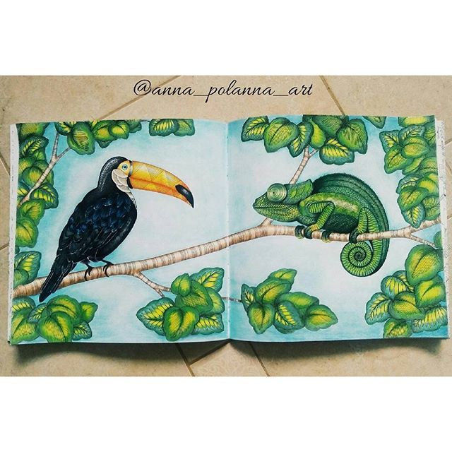 Anatomy Coloring Book Whsmith : 251 best images about animal kingdom on pinterest