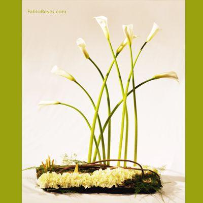 Pin by vanesa pascual on fabio reyes pinterest plants - Vanesa pascual ...