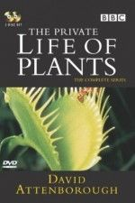 The Private Life of Plants with David Attenborough