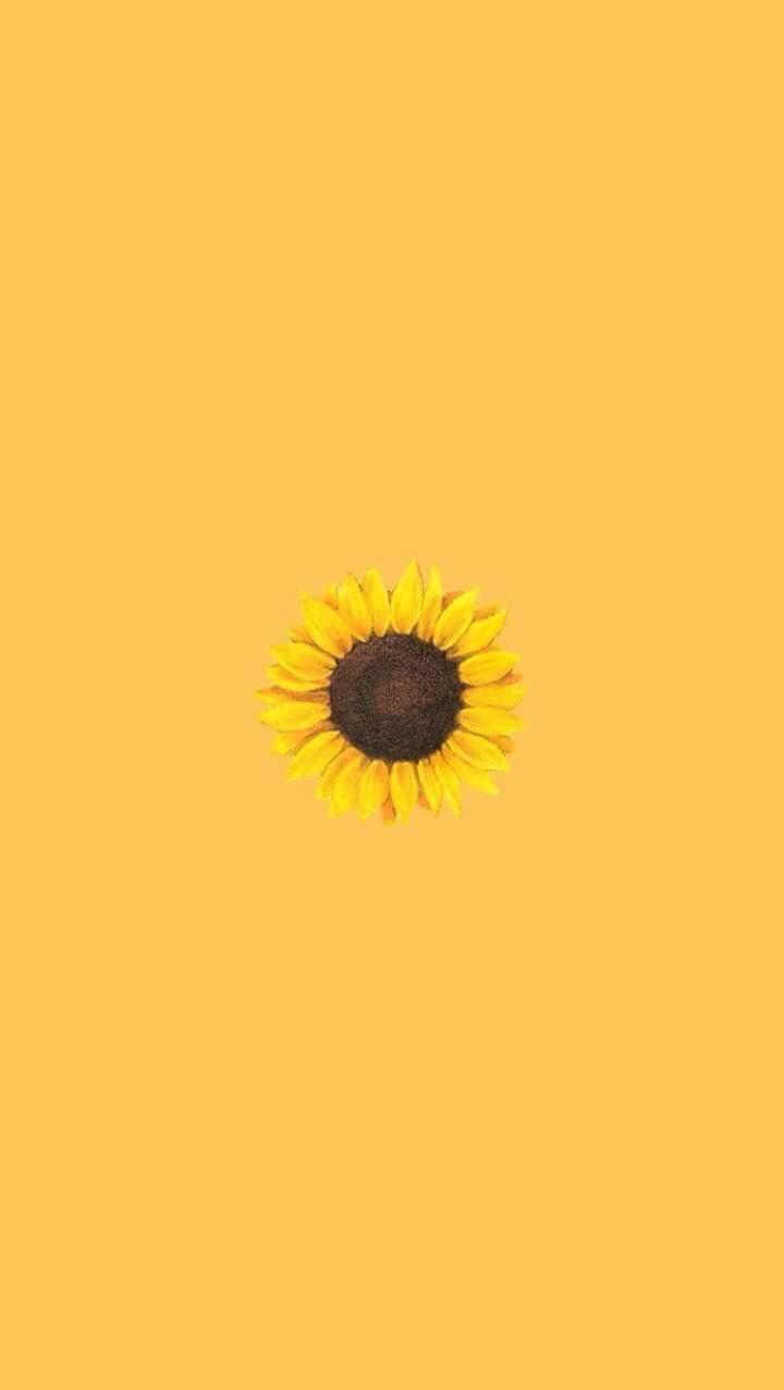 Yellow Wallpaper Yellow Sunflower Wallpaper Aesthetic Iphone Wallpaper Cellphone Wallpaper