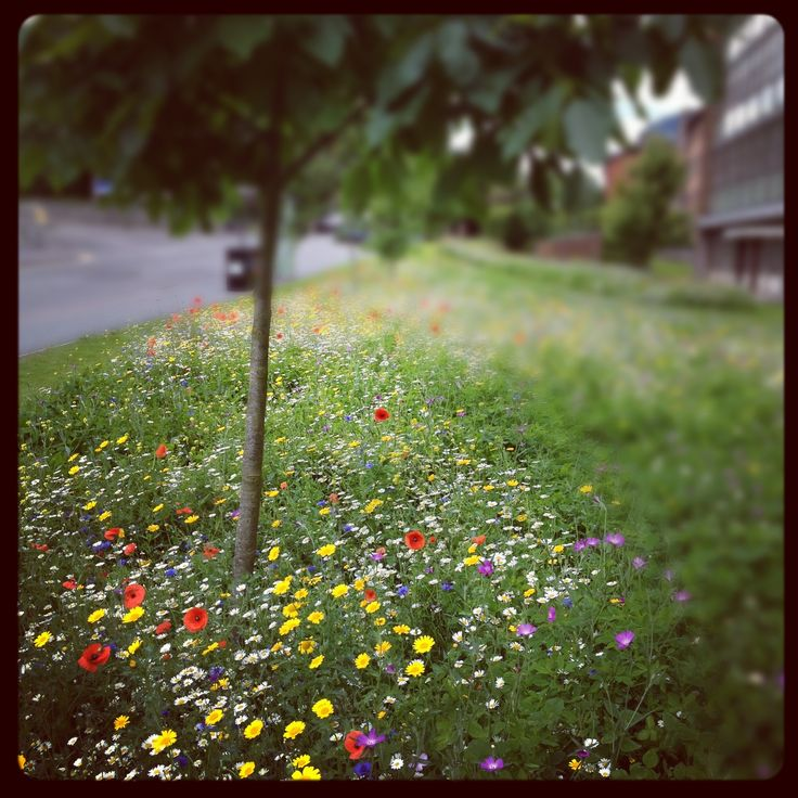 Wildflowers Images On Pinterest