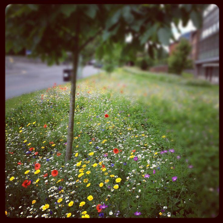 Landscape Gardening High Wycombe : Urban flower meadows at high wycombe from fennelandfern