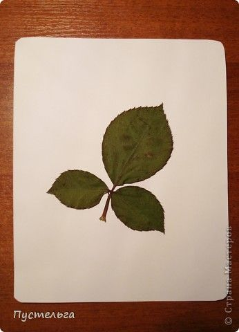 Мастер-класс Рисование и живопись: Аэрография для ребят Акварель, Материал природный. Фото 5
