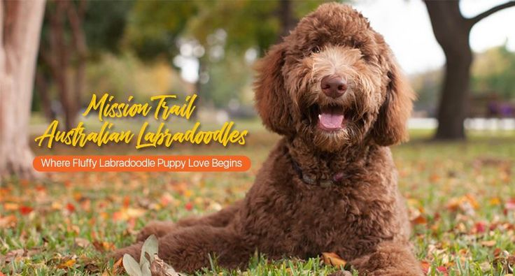 Best behaved and health tested dogs around