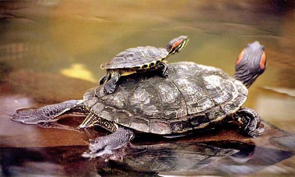 Tortugas Archives - Página 3 de 5 - Animal Mascota
