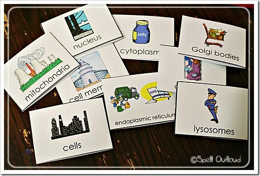 Parts of a cell flashcards. Goes along w/ @ApologiaWorld Anatomy. #homeschool