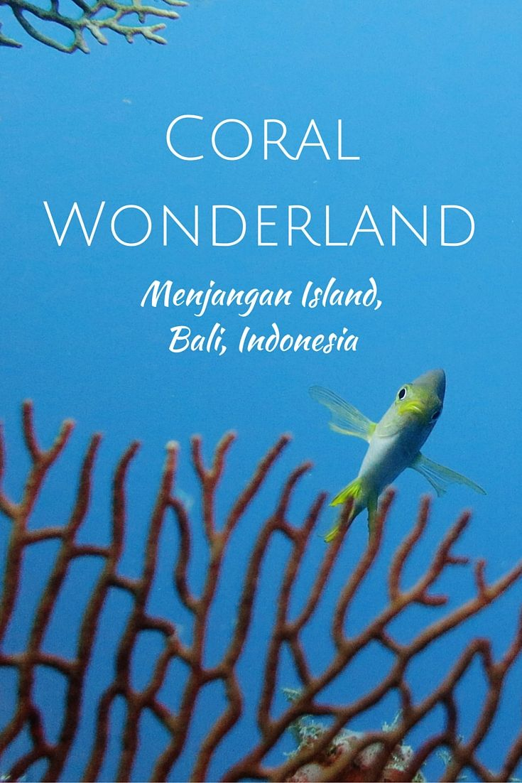 Coral Wonderland - Scuba diving & Snorkeling in Menjangan Island, Bali, Indonesia. www.villapantaibali.com Don't forget when traveling that electronic pickpockets are everywhere. Always stay protected with an Rfid Blocking travel wallet. https://igogeer.com for more information. #igogeer
