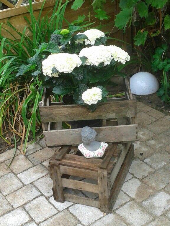 1000 ideas about bauernhortensie on pinterest hortensie. Black Bedroom Furniture Sets. Home Design Ideas