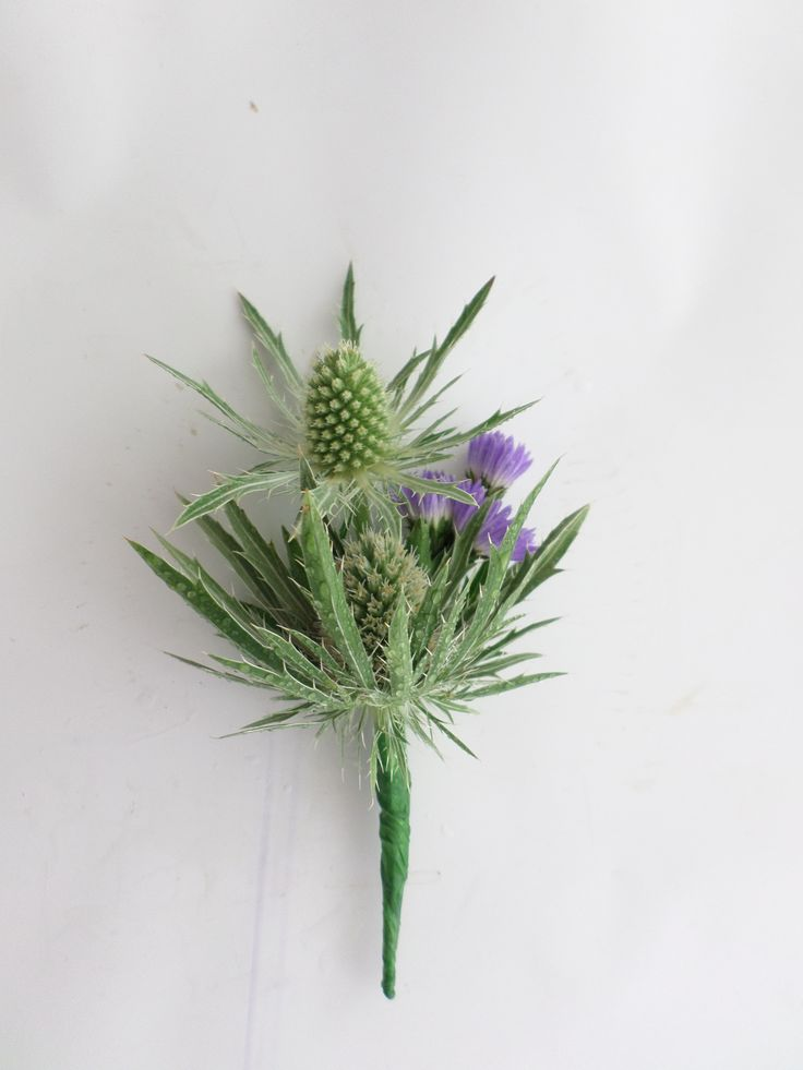 Unique wedding buttonhole using Sea Holly Created by http://floristilene.co.nz/