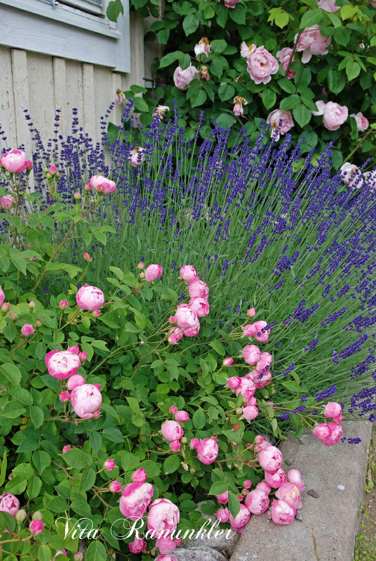 Best Landscaping Ideas Images On Pinterest Landscaping Ideas