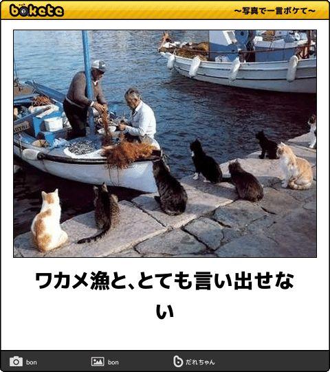 ワカメ漁と、とても言い出せない