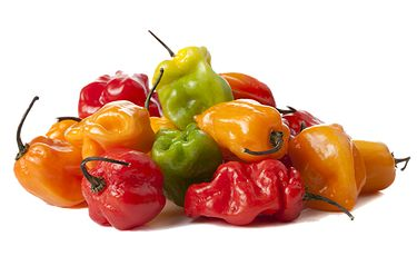 HOT HOT HOT Scotch bonnet pepper! One of these bad boys can  do some real damage...but no worries. We've got the perfect blend. Reggae for you