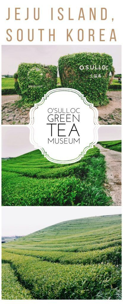 A JEJU KOREA travel guide to the bright green tea fields of the O'Sulloc Tea Museum on beautiful Jeju Island off the coast of South Korea, including its delicious cafe and unique Innisfree shop!