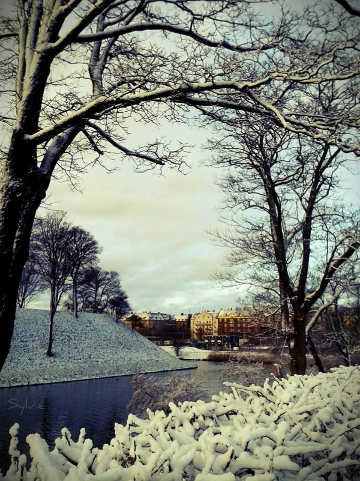 Neve a Copenhagen Sylvié Photo