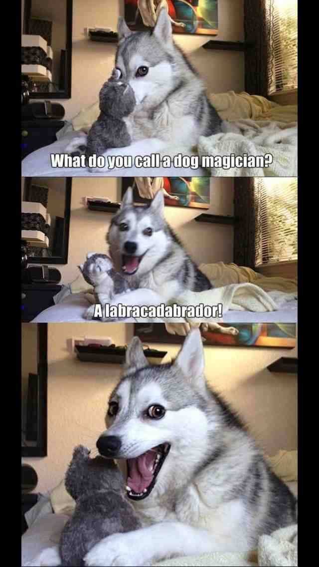 Funny Husky Has Jokes