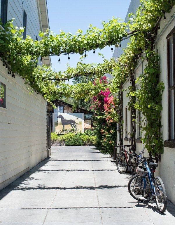 Love the vines growing along the hanging lights. Great idea over a patio. Sonoma Plaza Stroll