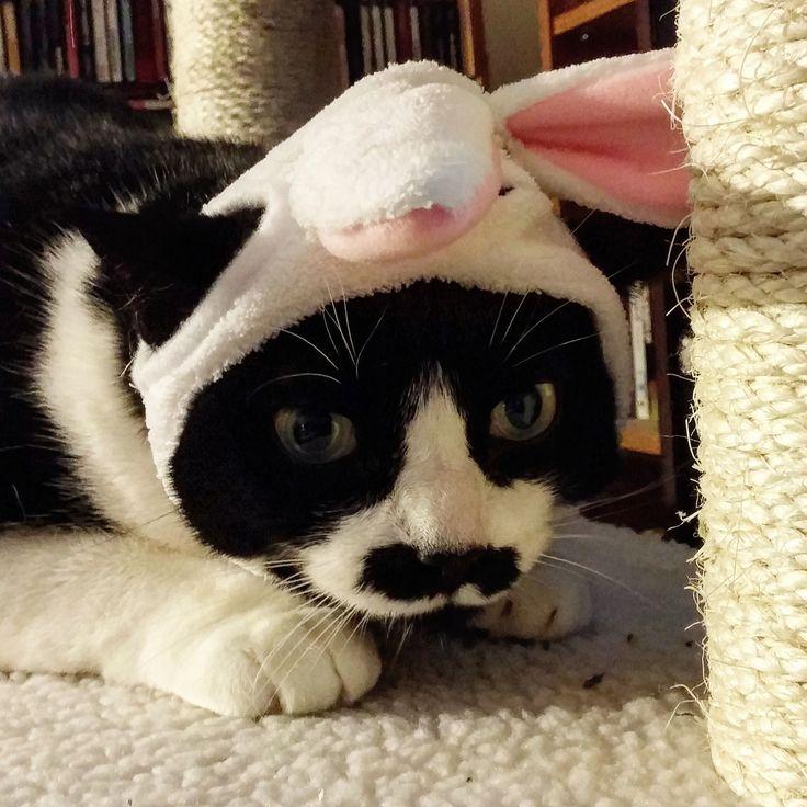 https://flic.kr/p/EePpLz   Easter Grumpy II   Here's your flippin' colored eggs!