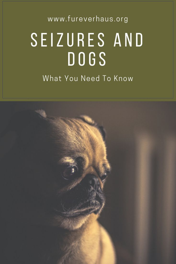 When A Dog Has Seizure It Can Be Very Scary Here Are Some Signs