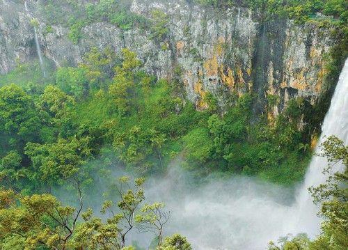 Rainforest 4WD Tours